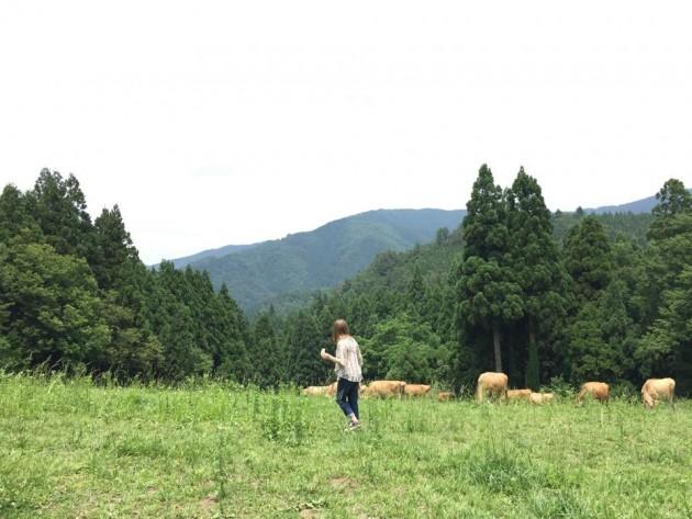 福井の牧場